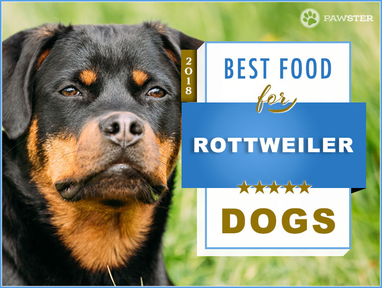 Best Food To Feed Rottweilers