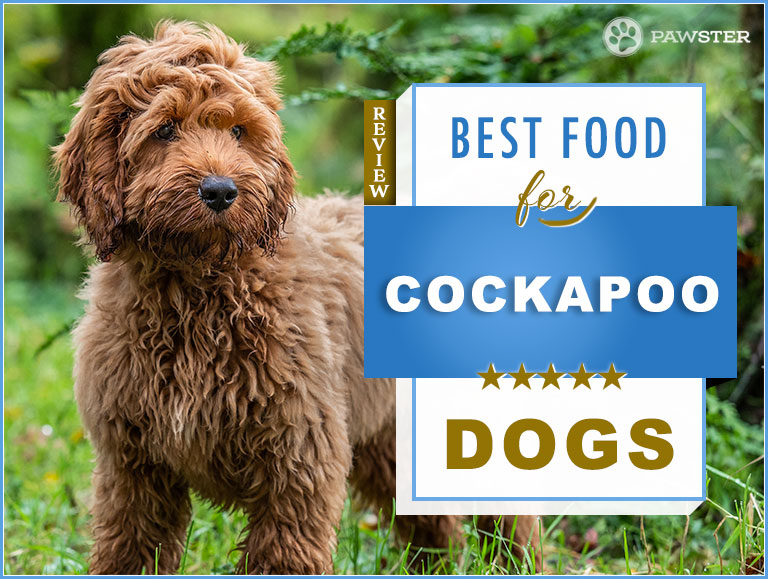 7 Best Foods to Feed your Adult and Puppy Cockapoo in 2019