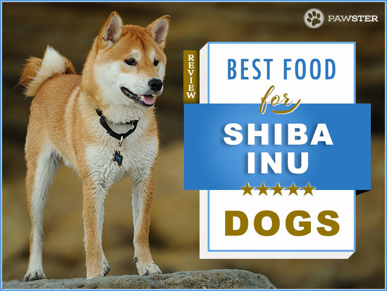 The 7 Best Foods To Feed Your Adult And Puppy Shiba Inu