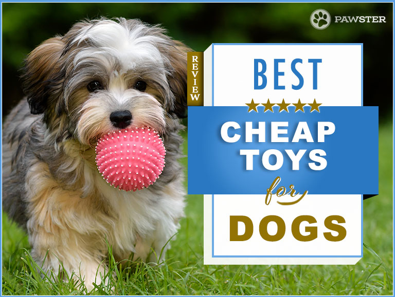 The 7 Best Cheap Inexpensive Dog Toys On The Market Our Guide
