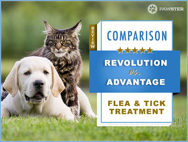 Revolution Vs Advantage Flea Treatment 2020 Comparison