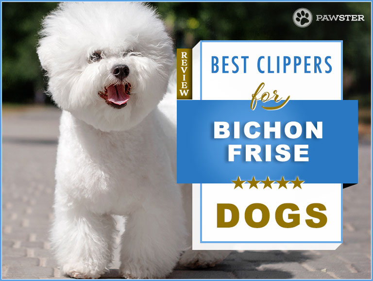 5 Best Dog Hair Clippers for a Bichon Frise in 2019