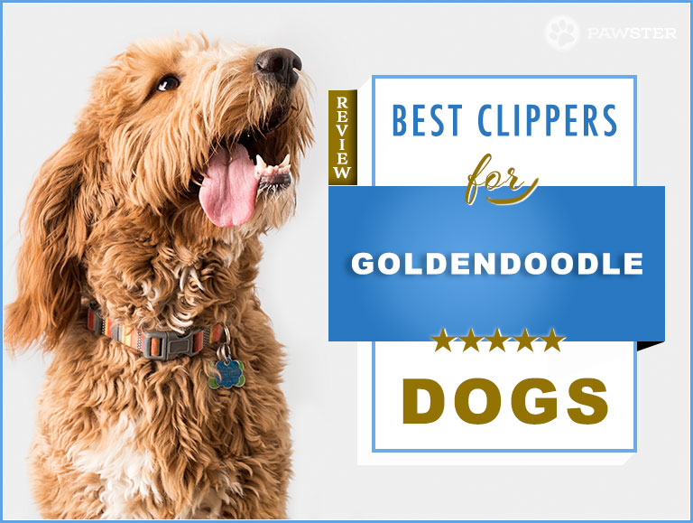 6 Best Dog Clippers for Goldendoodles in 2019