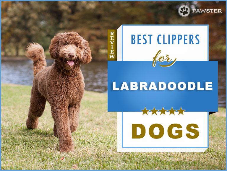 6 Best Dog Clippers For Labradoodles Our Doodle Grooming