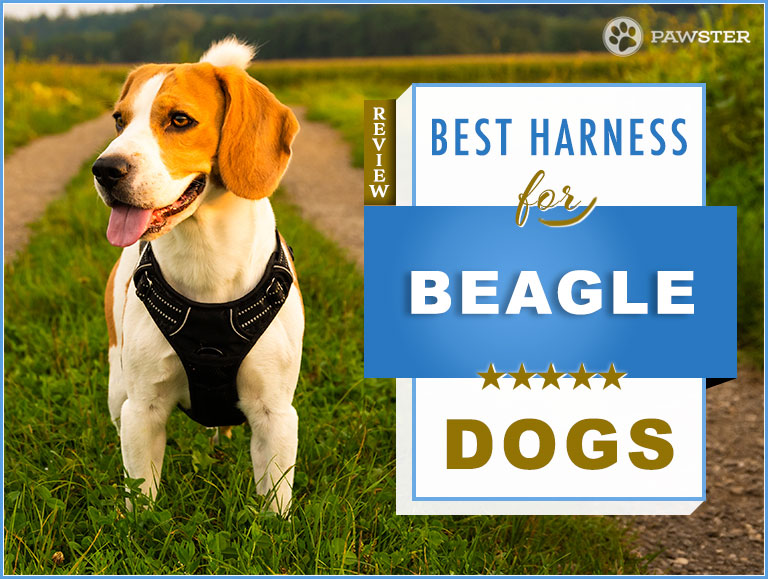 7 Best Dog Harnesses For Beagles In 2020